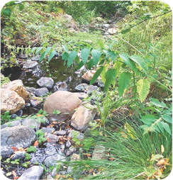 Historic, beautiful 1,200-acre Calabazas Creek Preserve will become a park