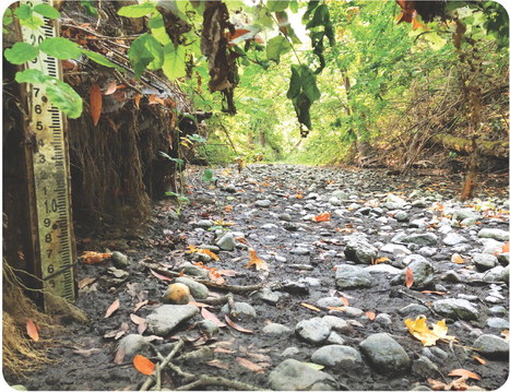 Sonoma Creek is drying up
